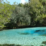 silver glen springs dsc00612 150x150 Fly and Drive Florida + Miami