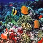 Barriera corallina 150x150 Habiba Resort **** Marsa Alam   Recensione Ufficiale