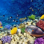 amazing coral reefs 13 150x150 Tamra Beach ***** Sharm El Sheikh   Recensione ufficiale