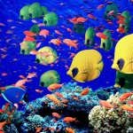 tropical coral fishes 788 5 150x150 Tamra Beach ***** Sharm El Sheikh   Recensione ufficiale
