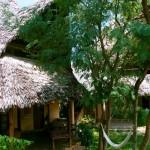 57106_Resort_Coral_Key_Beach_Resort_Malindi_Eden_Special_z_