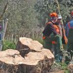 33a9eaf8300aac5339fdd18546f4045e 150x150 Addio agli ulivi in Puglia?