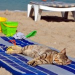 Cat Relaxing On The Beach cats 37184136 500 600 150x150 In vacanza con i nostri animali: cosa mettere in valigia