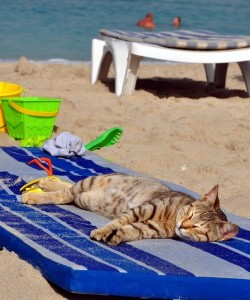 Cat Relaxing On The Beach cats 37184136 500 600 250x300 In vacanza con i nostri animali: cosa mettere in valigia
