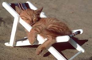 Cat on beach 300x197 In vacanza con i nostri animali: cosa mettere in valigia