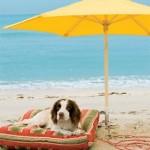 Dog at beach 276x3001 150x150 In vacanza con i nostri animali: cosa mettere in valigia