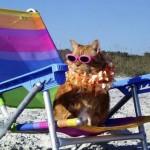 cat on beach1 150x150 In vacanza con i nostri animali: cosa mettere in valigia