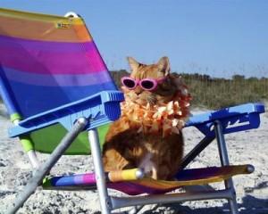 cat on beach1 300x240 In vacanza con i nostri animali: cosa mettere in valigia
