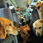 dog travel 2 150x150 In vacanza con i nostri animali: durante il viaggio