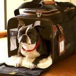 dog under airline seat 150x150 In vacanza con i nostri animali: durante il viaggio