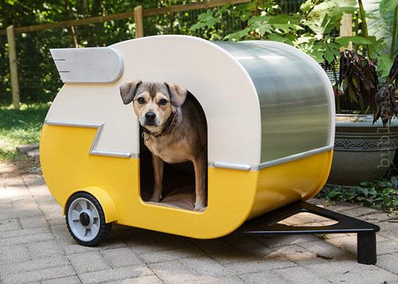 dog road trip In vacanza con i nostri animali: durante il viaggio