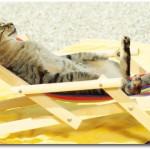 gatto1 150x150 In vacanza con i nostri animali: cosa mettere in valigia