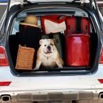gty vacation dog sc 110704 wg 150x150 In vacanza con i nostri animali: durante il viaggio