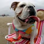 iStock 000005489985Small 150x150 In vacanza con i nostri animali: cosa mettere in valigia