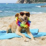 relaxing dog at the beach 150x150 In vacanza con i nostri animali: cosa mettere in valigia