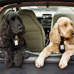 web dogs in back of car image 150x150 In vacanza con i nostri animali: durante il viaggio